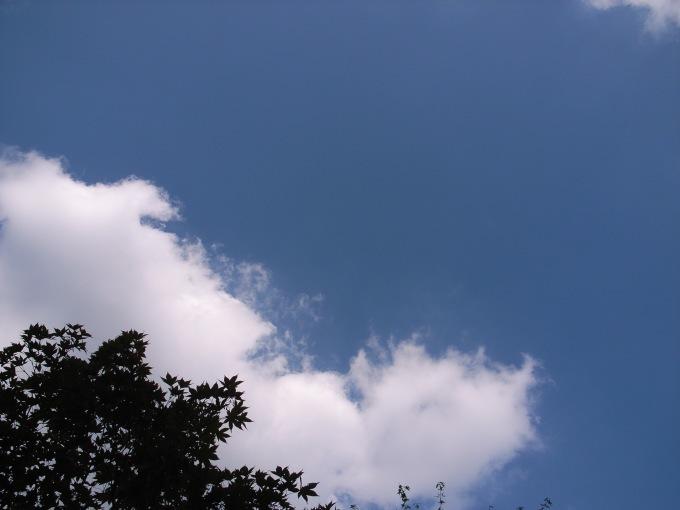 Naps! 秋の シャツ祭り 開催‼︎ アーカイブセール!!_d0334060_15463215.jpg