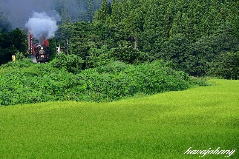 緑の絨毯~SLばんえつ物語号~_c0173762_20064217.jpg