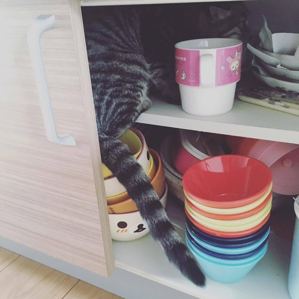 in the shelf_b0195783_08224315.jpg