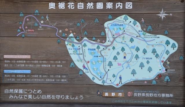 6月9日 奥裾花自然園_c0124100_14560775.jpg