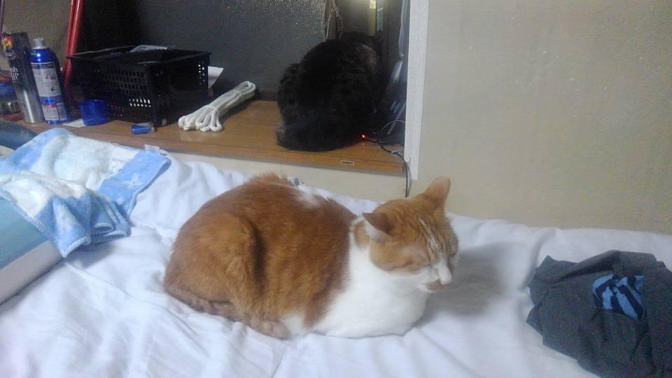 【猫】まったりと・・?_f0141609_23512984.jpg