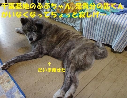 f0121712_07324353.jpg