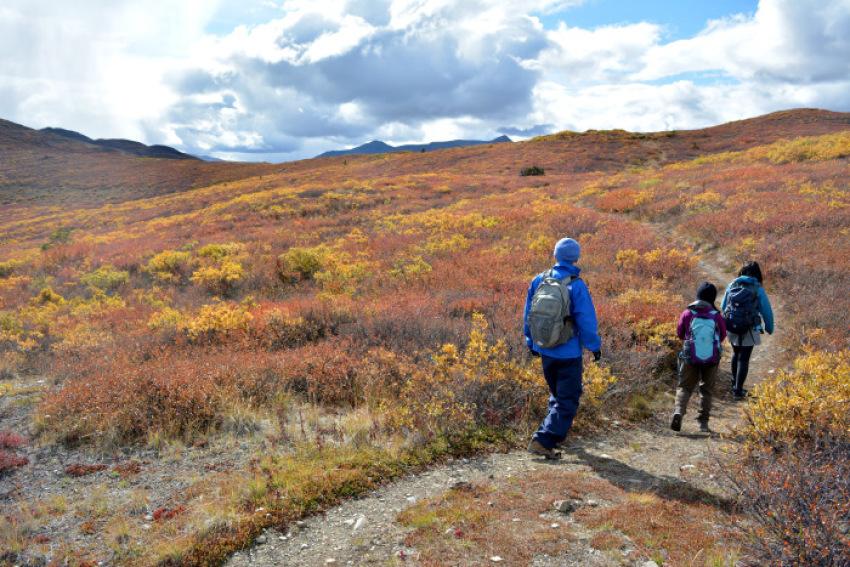 極北の秋 ツンドラ紅葉 フィッシュ レイク ハイキング_d0112928_08074089.jpg