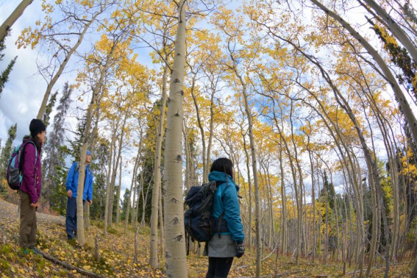 極北の秋 ツンドラ紅葉 フィッシュ レイク ハイキング_d0112928_08173073.jpg