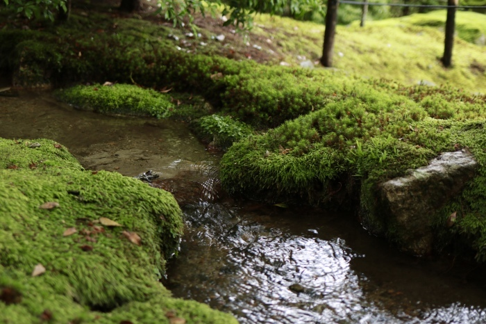 【旧竹林院/庭園】夏の帰省 - 19 -_f0348831_22334890.jpg