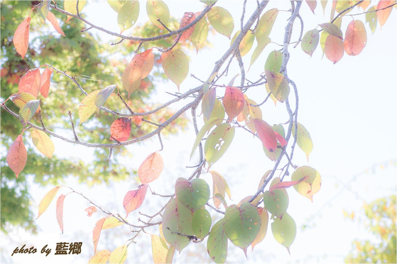 a0245331_19565703.jpg
