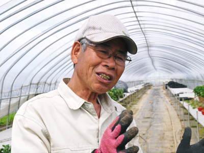 完熟紅ほっぺ まもなく定植!栽培ハウスの今の様子と元気な苗床の苗!こだわりの減農薬栽培で育てます!_a0254656_18525103.jpg