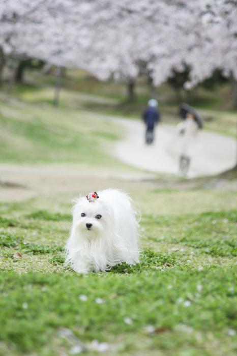 最近のPhoto☆_b0123371_22174310.jpg