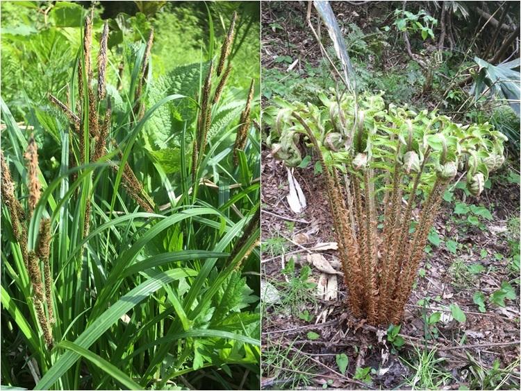 5月2-3日 山菜採りの合間に、野草たち_c0124100_15260492.jpg