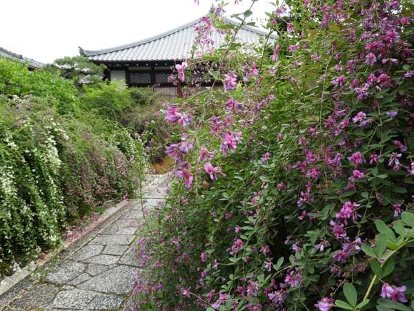 萩の寺 常林寺_e0048413_19050006.jpg