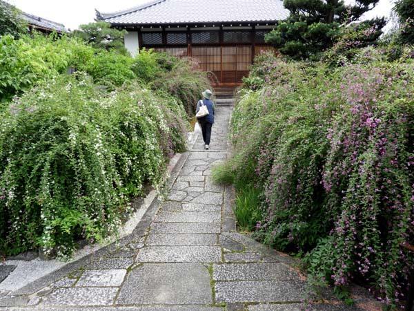 萩の寺 常林寺_e0048413_19050322.jpg