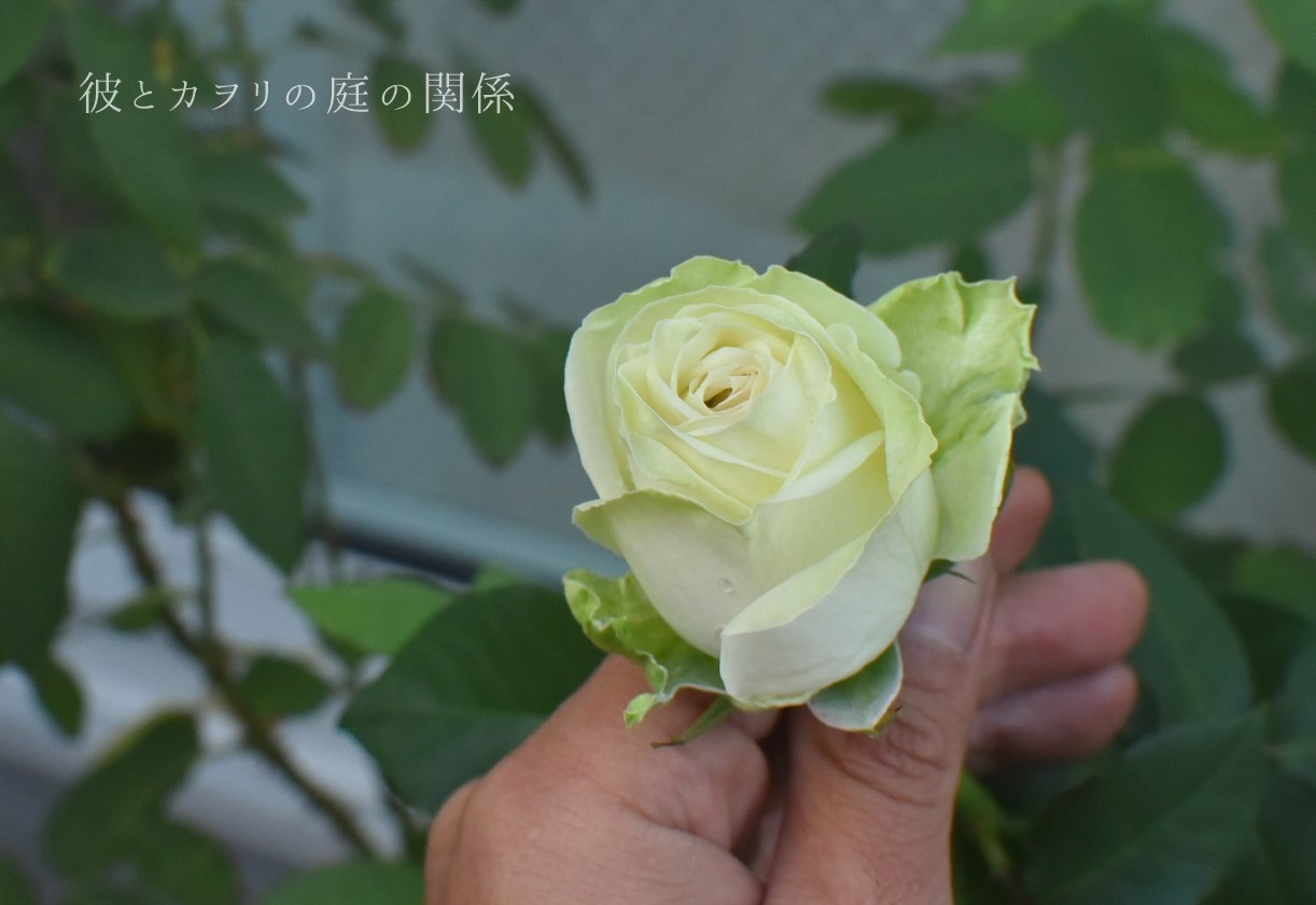 c0365716_20084875.jpg
