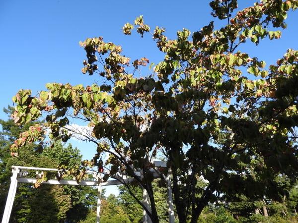 週末の天気と気温(9月4週目)_b0174425_10280082.jpg