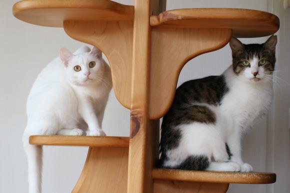 9/24(日)神奈川県動物保護センター譲渡会参加猫さん_e0151545_21122357.jpg