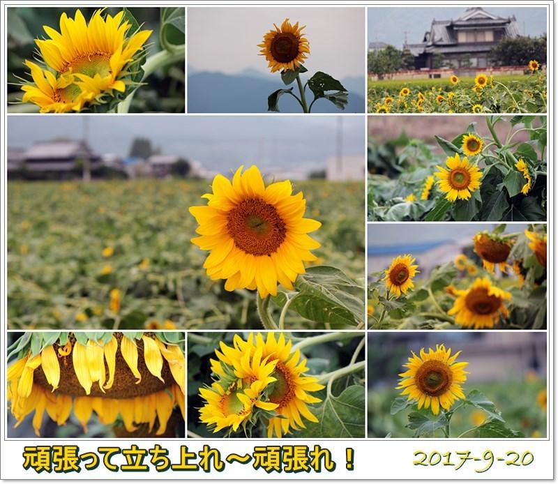 f0104569_00325930.jpg