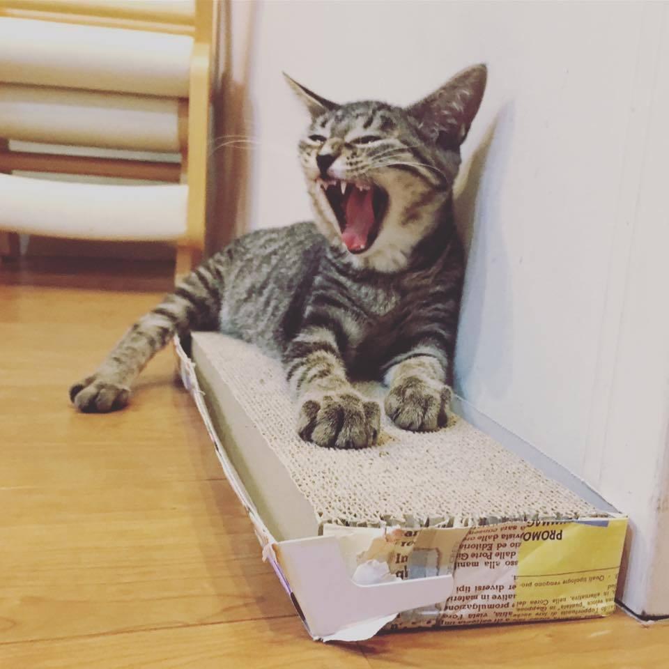 猫アレルギー_b0195783_10335644.jpg