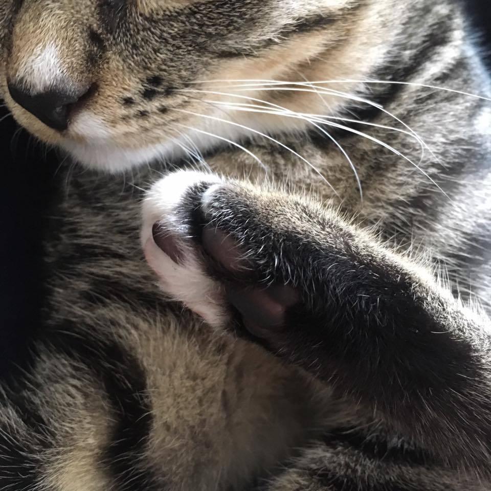 猫アレルギー_b0195783_10352813.jpg
