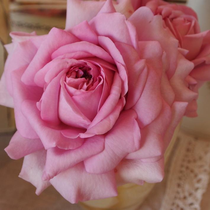 バラの鉢植え栽培_a0292194_198464.jpg