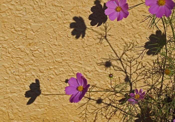 壁のキャンバス_d0162994_08135434.jpg