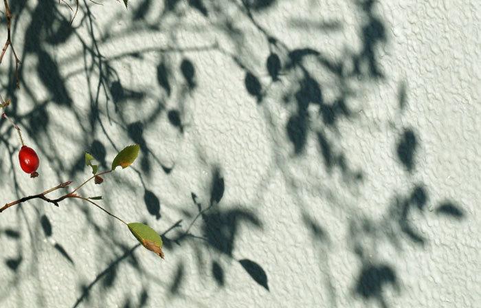 壁のキャンバス_d0162994_08145004.jpg