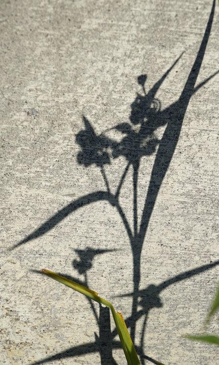 壁のキャンバス_d0162994_08153002.jpg