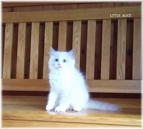 ☆みかんちゃんと今日の仔猫たち。_c0080132_17571796.jpg