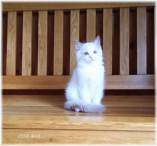 ☆みかんちゃんと今日の仔猫たち。_c0080132_17575879.jpg