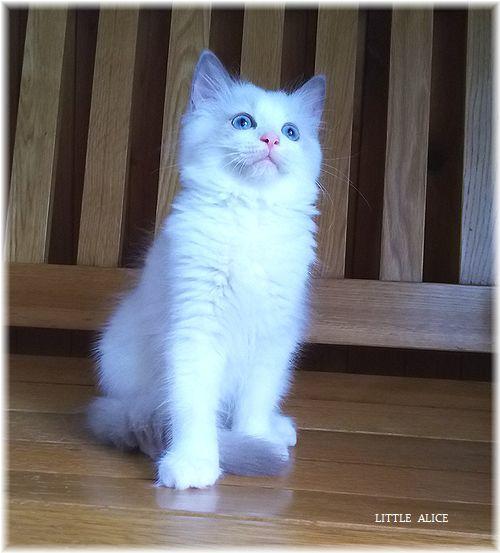 ☆みかんちゃんと今日の仔猫たち。_c0080132_17584494.jpg