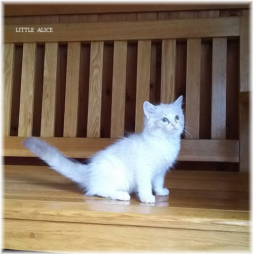 ☆みかんちゃんと今日の仔猫たち。_c0080132_17594099.jpg