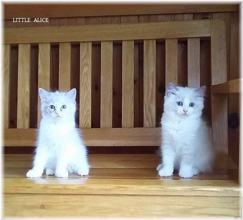 ☆みかんちゃんと今日の仔猫たち。_c0080132_18010883.jpg