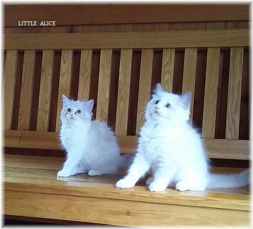 ☆みかんちゃんと今日の仔猫たち。_c0080132_18015000.jpg