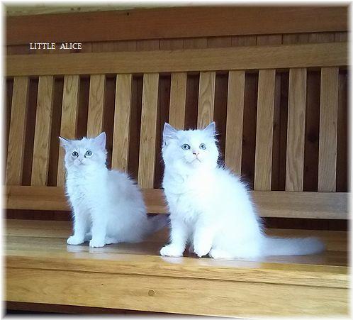 ☆みかんちゃんと今日の仔猫たち。_c0080132_18024027.jpg