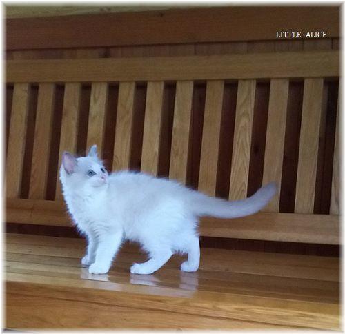 ☆みかんちゃんと今日の仔猫たち。_c0080132_18044107.jpg