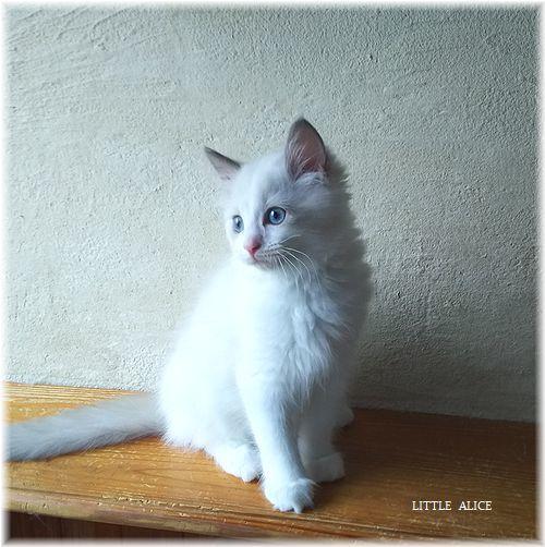 ☆みかんちゃんと今日の仔猫たち。_c0080132_18054594.jpg