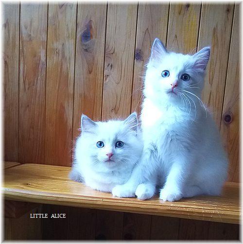 ☆みかんちゃんと今日の仔猫たち。_c0080132_18064703.jpg