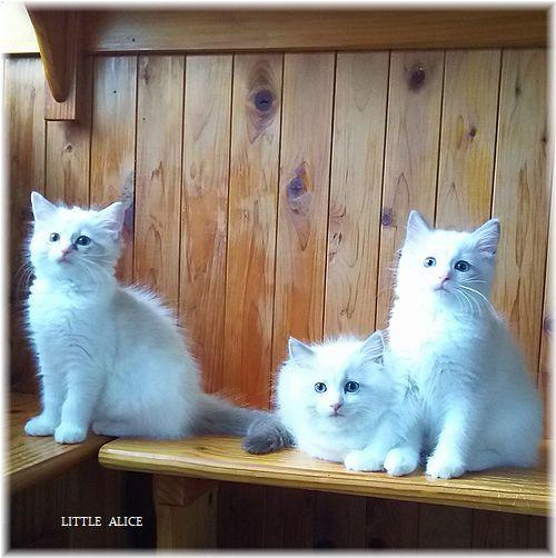 ☆みかんちゃんと今日の仔猫たち。_c0080132_18090611.jpg