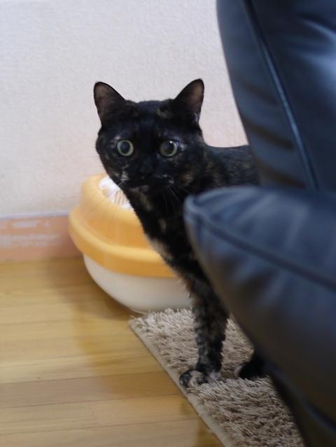 猫のお留守番 クゥちゃん編。_a0143140_00395644.jpg