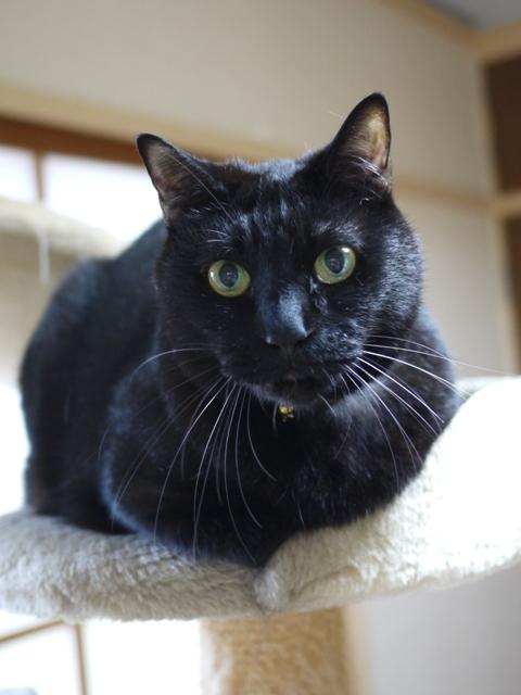 猫のお留守番 ウニくん編。_a0143140_00510599.jpg