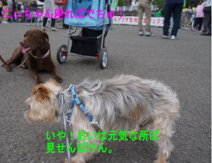 d0013645_20221061.jpg