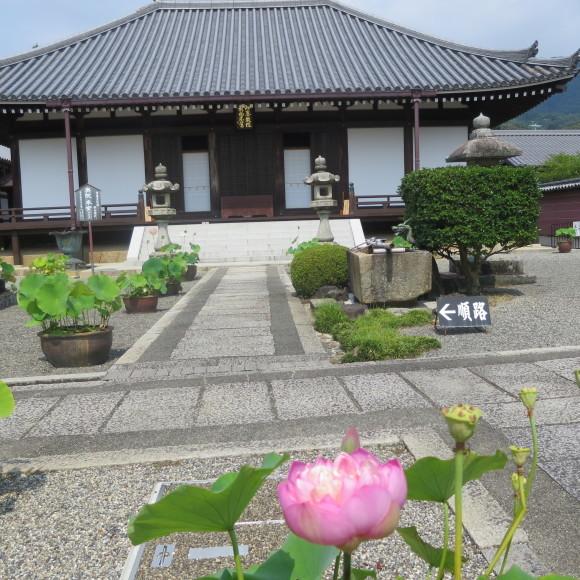 當麻寺と当麻寺とどちらを表記しようかと考えた上変換で先に出てきた方にした 葛城市_c0001670_20090189.jpg