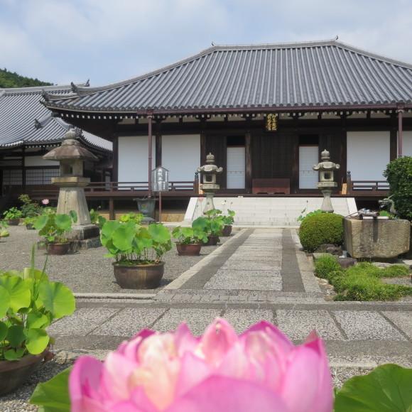 當麻寺と当麻寺とどちらを表記しようかと考えた上変換で先に出てきた方にした 葛城市_c0001670_20093018.jpg