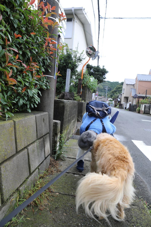 ハナちゃんどこへ行く?_b0275998_14294475.jpg