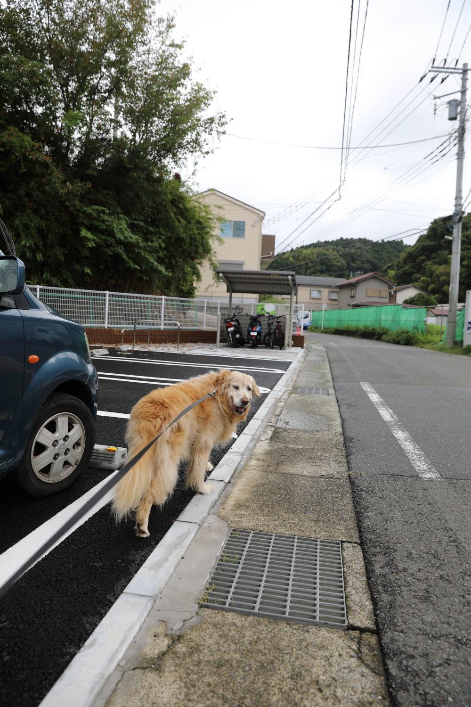 ハナちゃんどこへ行く?_b0275998_14294867.jpg