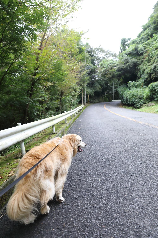 ハナちゃんどこへ行く?_b0275998_14295322.jpg
