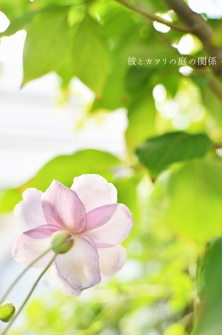c0365716_17091008.jpg