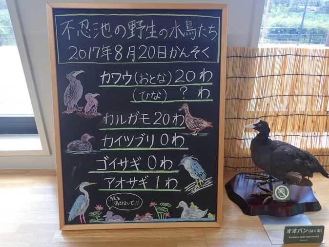 上野動物園:NEW子ども動物園すてっぷ~「すてっぷ館」_b0355317_20405547.jpg