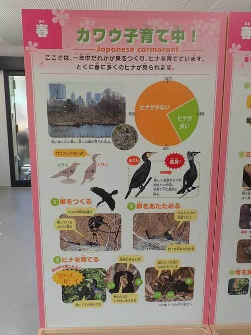 上野動物園:NEW子ども動物園すてっぷ~「すてっぷ館」_b0355317_20422837.jpg