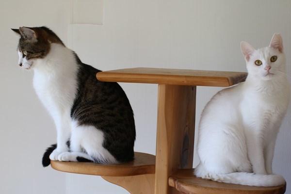 保護猫さん達、譲渡会に参加しました_e0151545_23182565.jpg