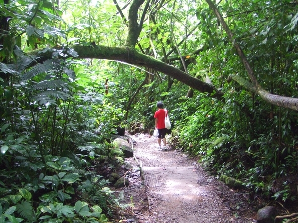 マノアの滝に向かっていた_d0355872_16085838.jpg
