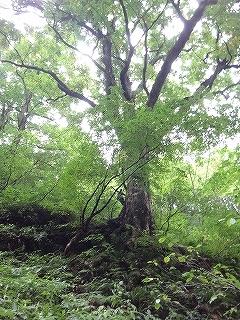 旧徳山村コビクラ谷から蕎麦粒山_e0064783_11065923.jpg